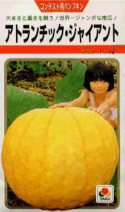 ジャンボかぼちゃ.jpg