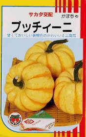 プッチーニかぼちゃ.jpg