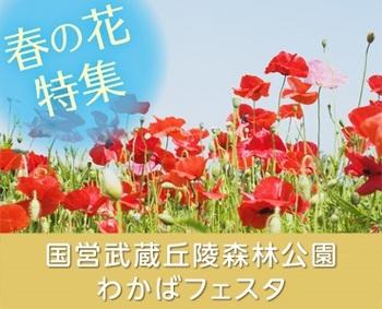 国営武蔵丘陵森林公園 「わかばフェスタ」.jpg