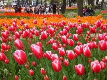 横浜公園「チューリップ祭り」.jpg